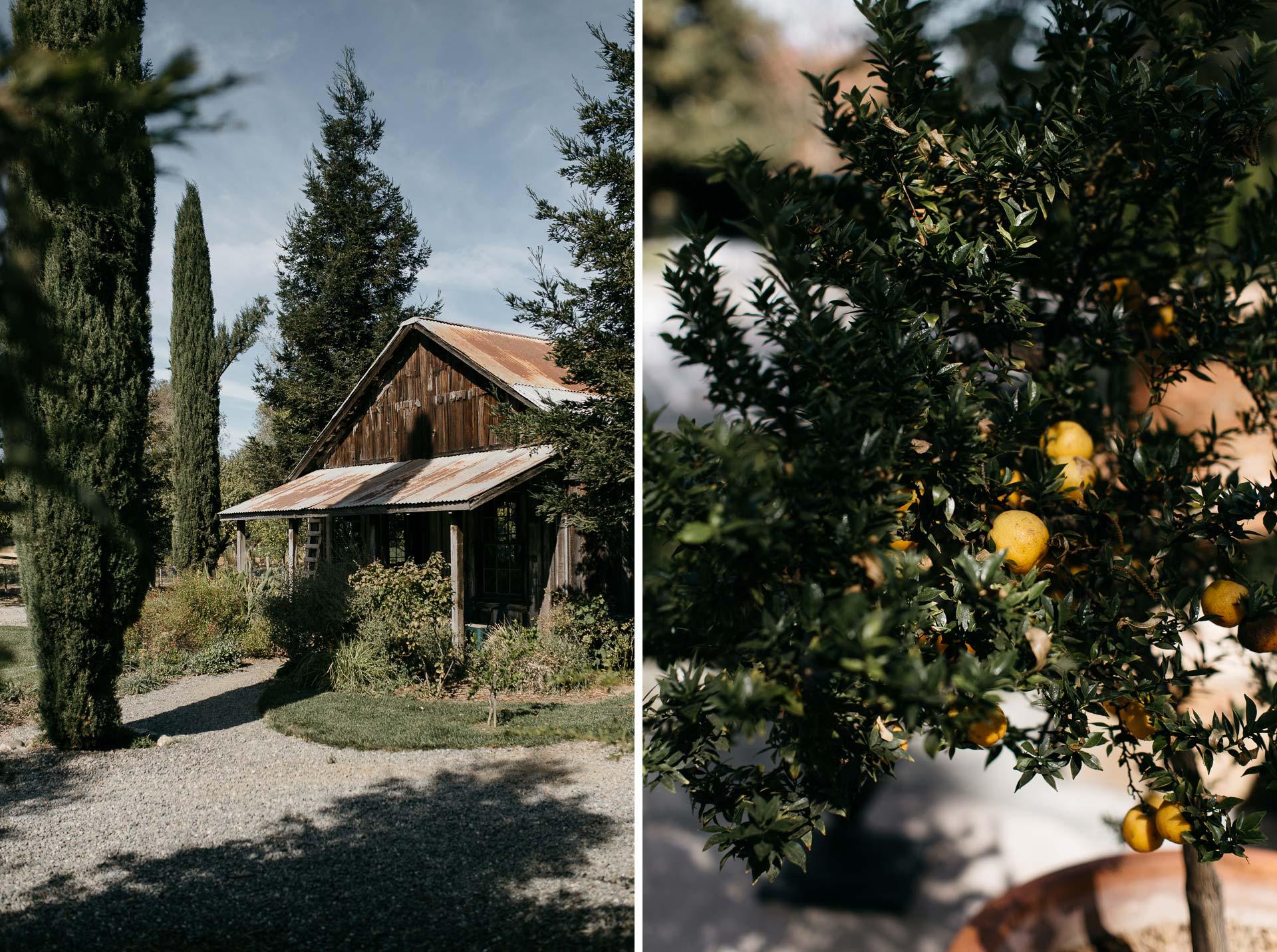lauren_graham_wedding_california_park_winters_jeanlaurentgaudy_mix006